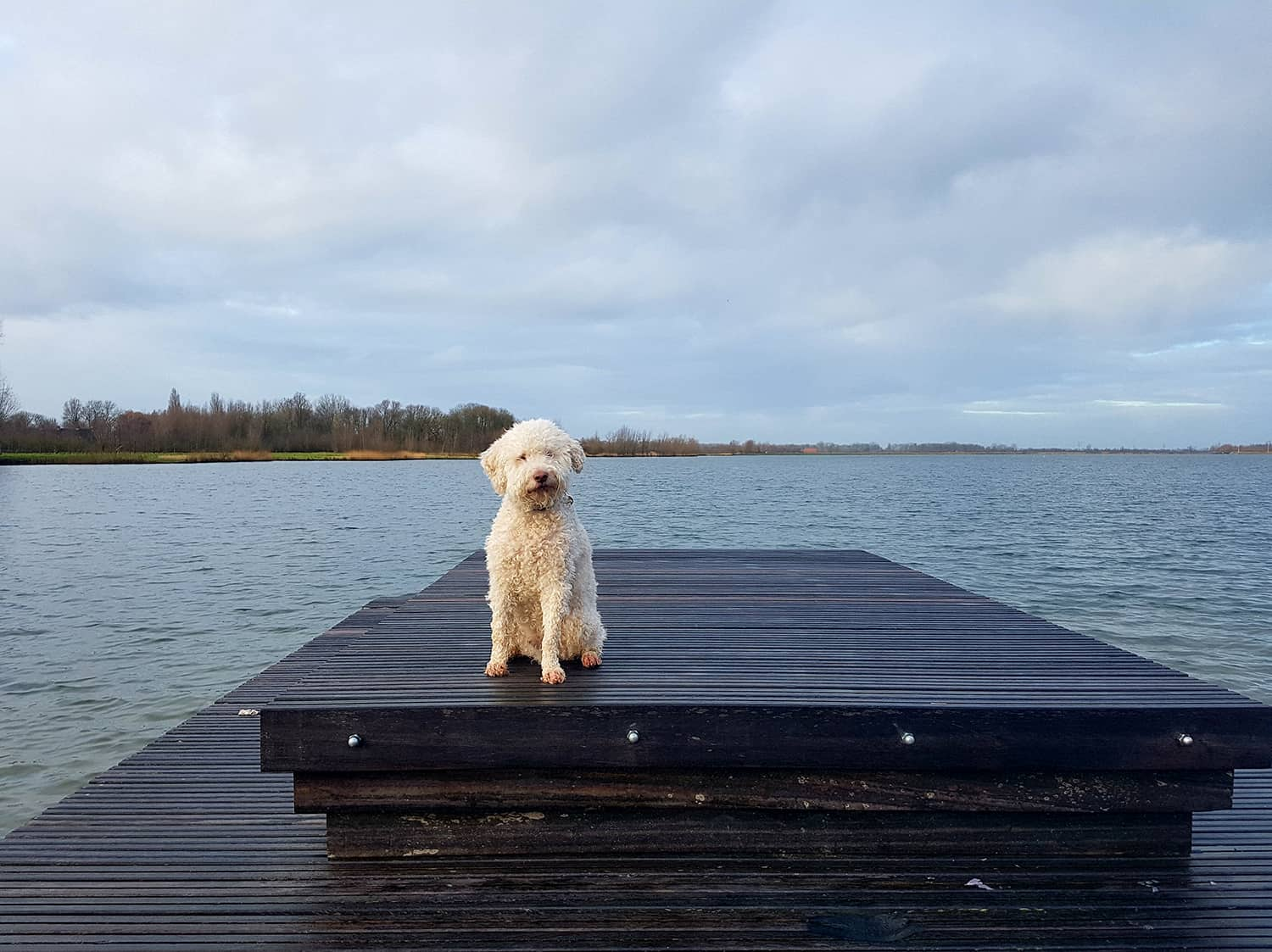 Lagotto Products Online